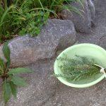 伊江島の旧盆や御願で使われる道具をご紹介します!